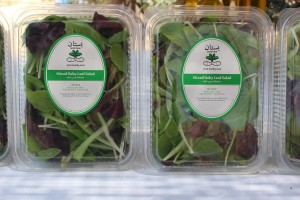 bustan aquaponics greens