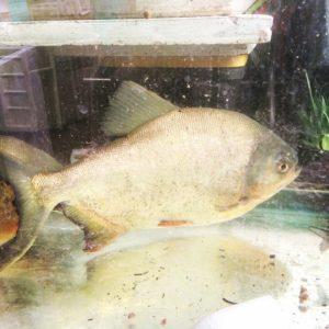 oko farms fish1