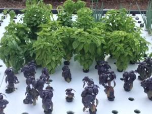 oko farms production